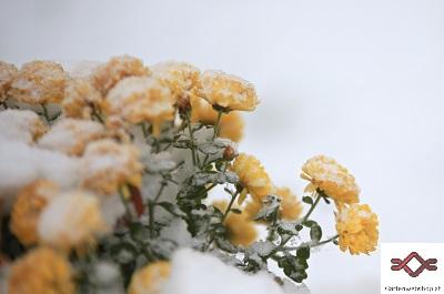 Winterschutz fuer Pflanzen 4 GW