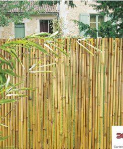 Bambus Sichtschutz 1 GW
