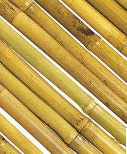 Bambus Sichtschutz 2 GW